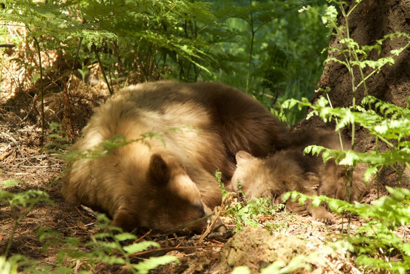Sleeping bears I encountered 2 years ago on the HST.