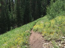 Wildflowers lined the trail