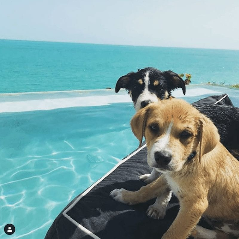 Cuddle With Puppies On The Beach On This Tropical Island, It Won't Cost You A Thing