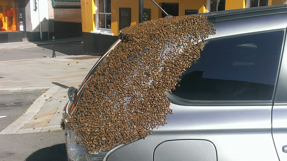 20,000 Bees Swarm Together For a 2 Day Car Chase To Rescue Their Queen