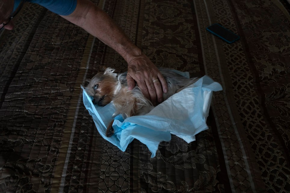 This Photographer Captures The Emotional Final Moments Between Pets And Their Owners