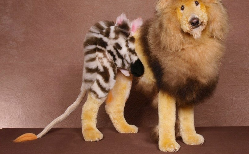 25 dogs groomed like exotic wild animals and fictional characters