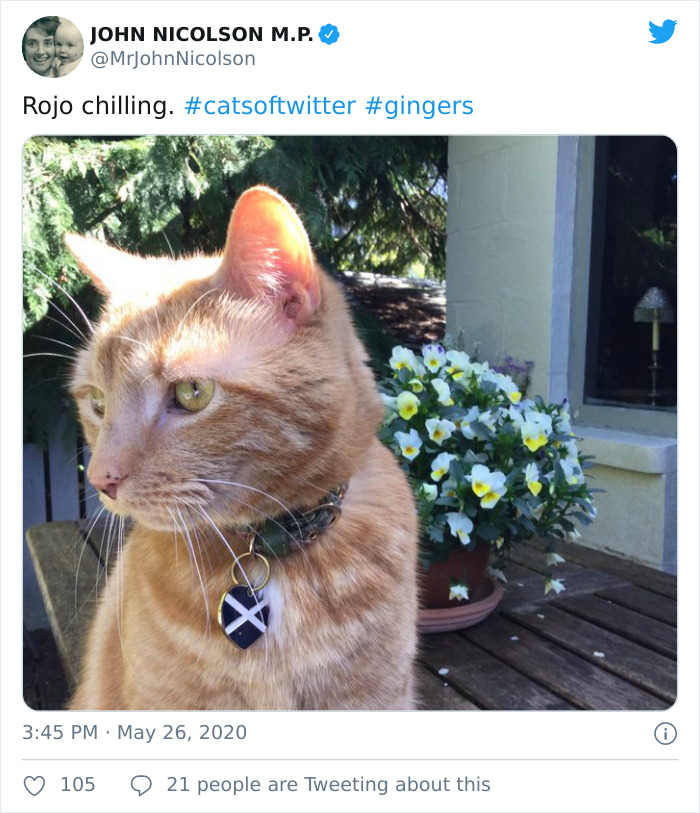 """""""i apologize for my cat's tail"""": scottish mp goes viral after his cat photobombs a zoom meeting"""