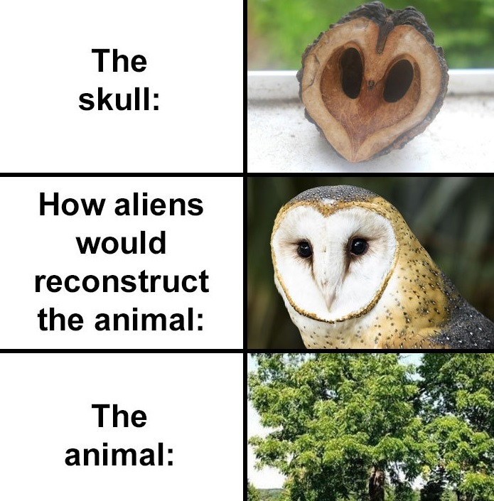 people compare how aliens would reconstruct animals based on their skulls vs. what they really look like