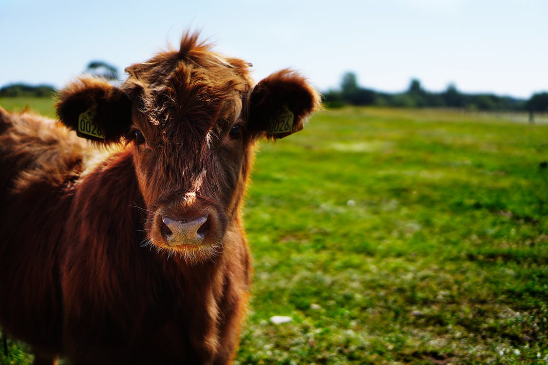 university bans all beef from campus in the fight against climate change