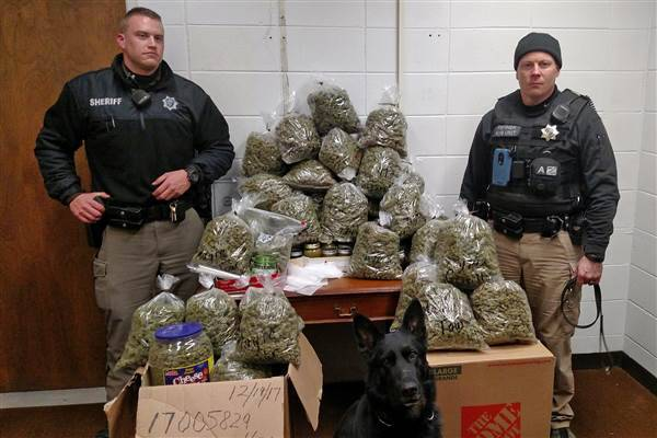 elderly couple busted with 60 pounds of marijuana, claim it's for 'christmas presents'