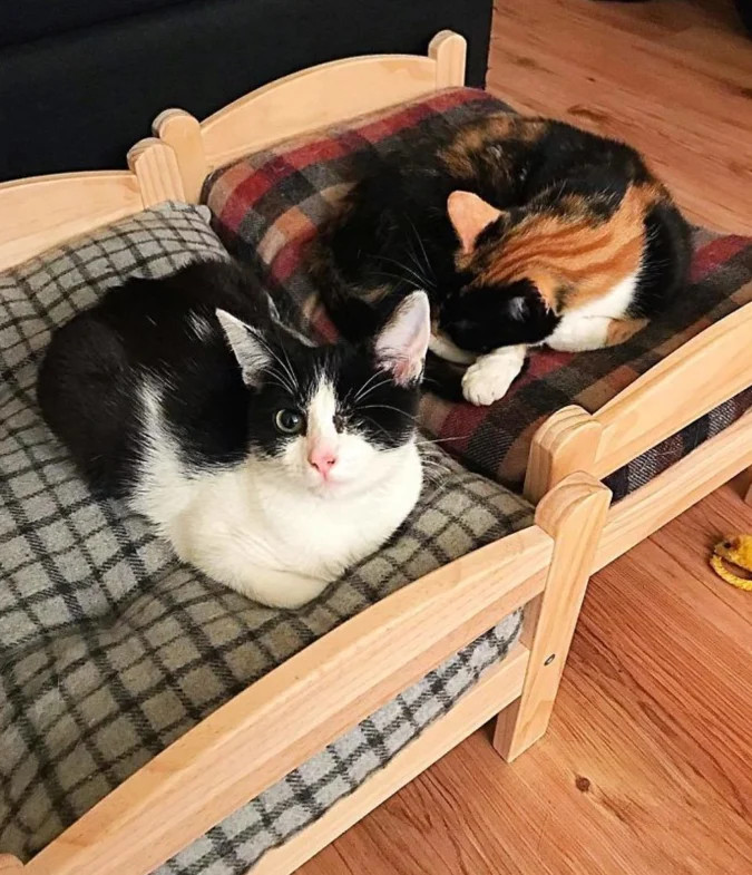 pet owners are buying ikea's children's dolls beds for their cats to sleep in