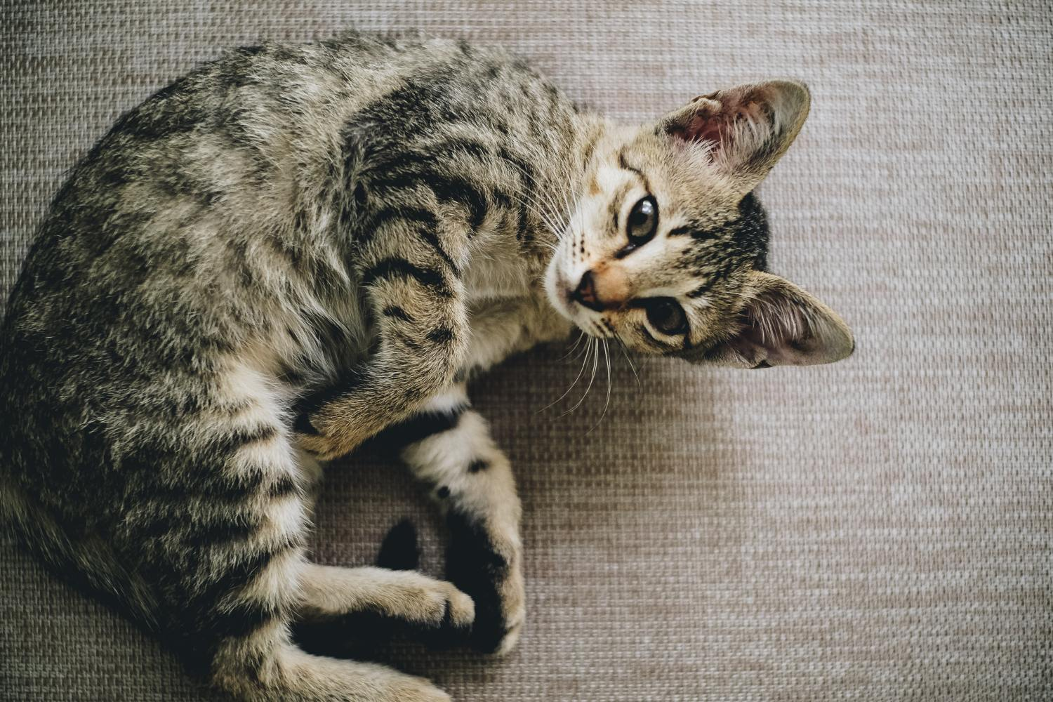 why does my cat pee on my bed? 11 causes and possible solutions