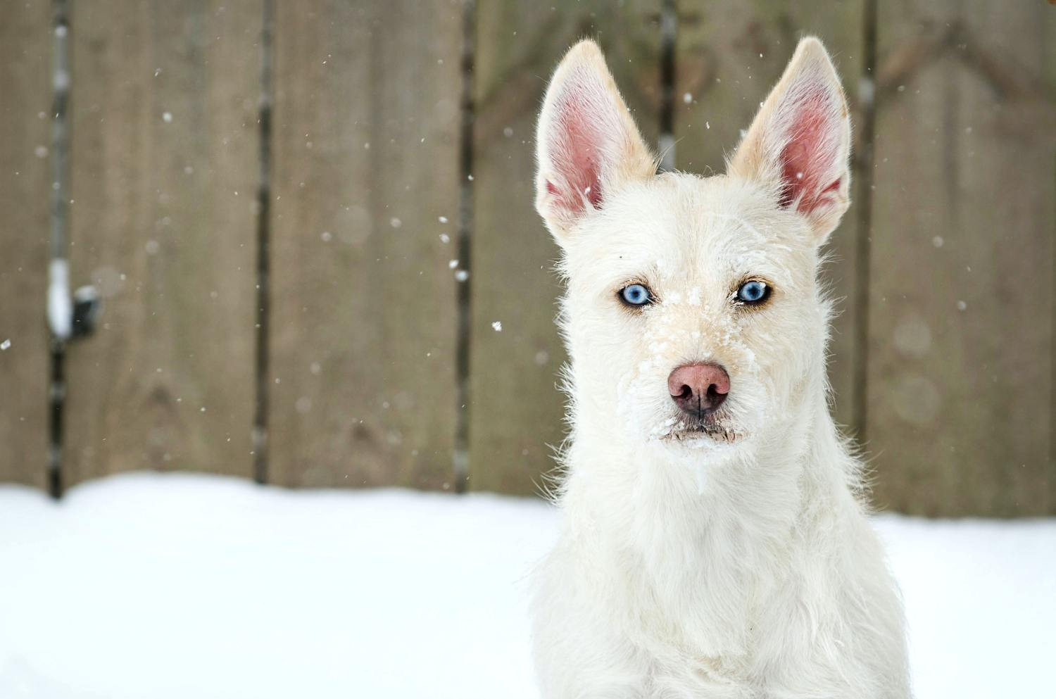 white dog names – amazing name ideas for your new white pooch