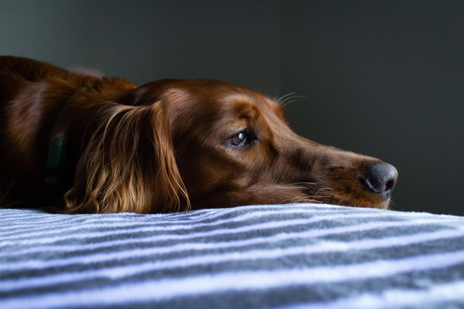 orange dog poop meaning: 5 reasons behind your pet's discolored stool