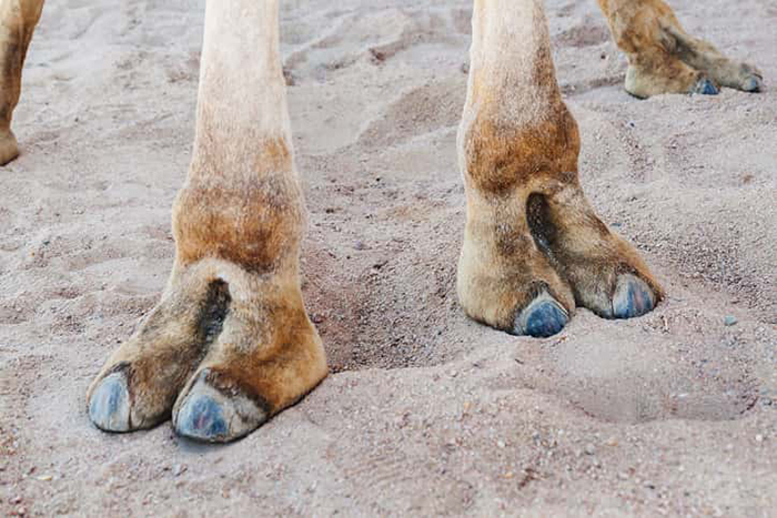 """c.toe is an actual fashion trend and people are clearly loving it for its """"unique"""" appeal"""