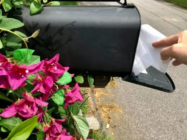 Mail Carriers Are Putting Dryer Sheets In Mailboxes To Keep Wasps Away
