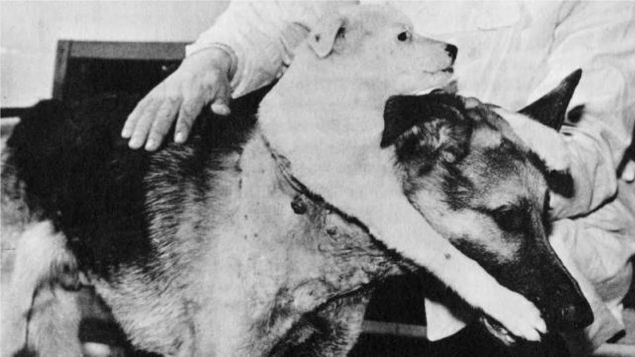 Vladimir Demikhov, The Man Who Made A Two-head Dog