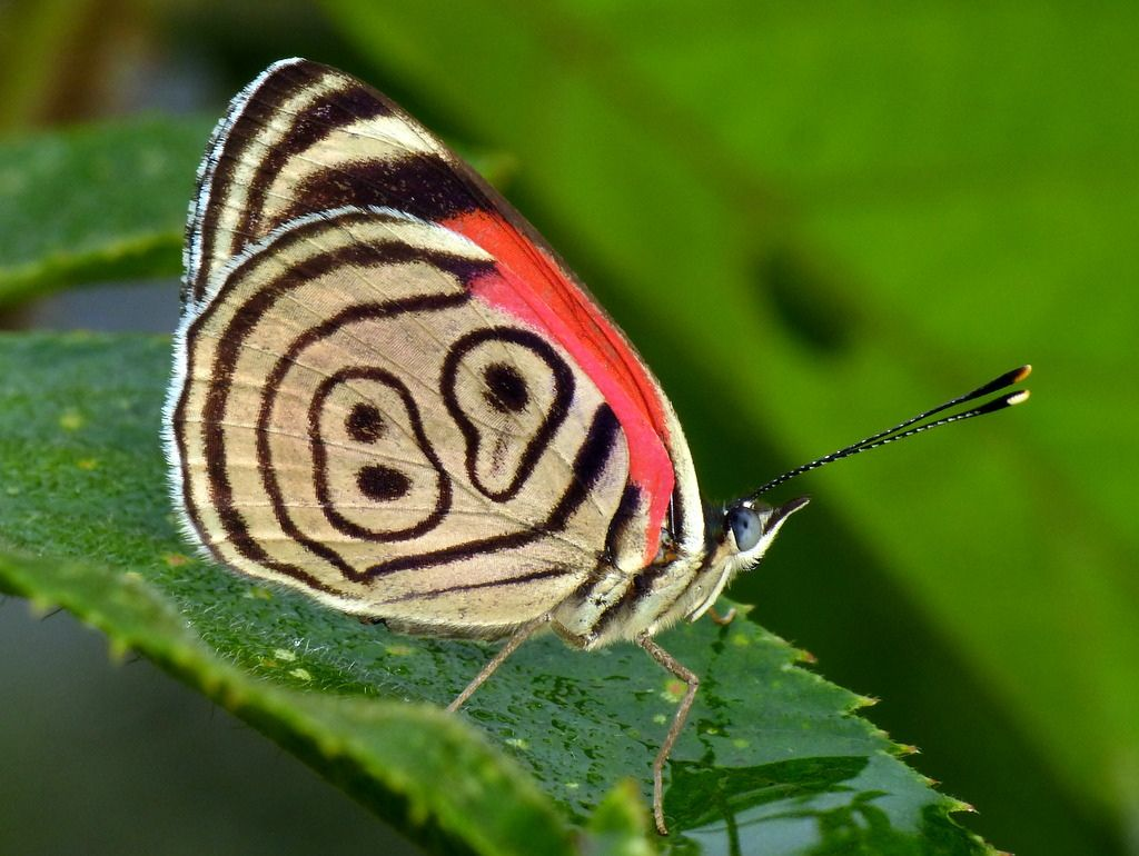 8 Most Beautiful Butterflies In The World