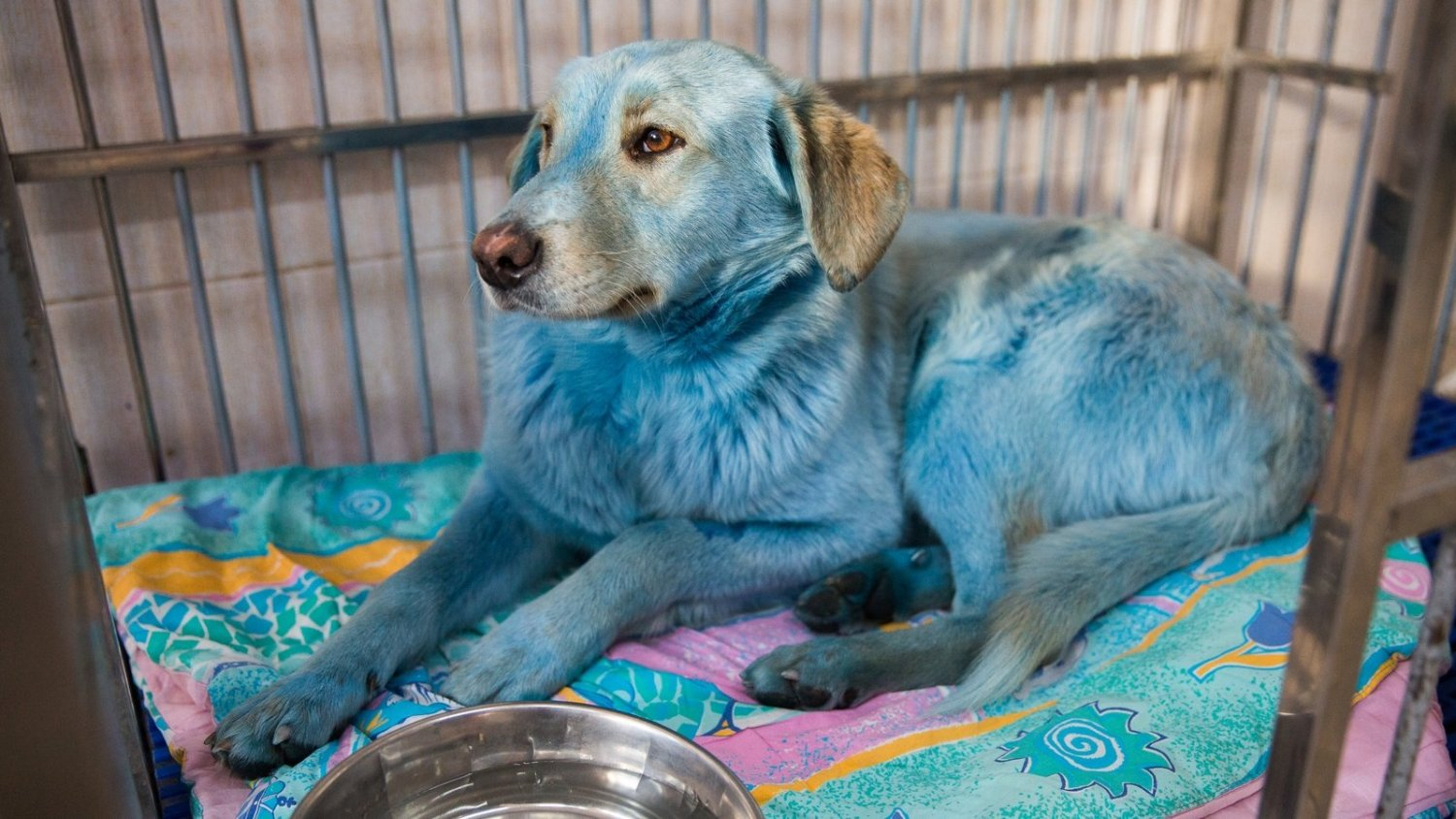 Stray Blue Dogs - A Strange Occurrence Observed Near An Abandoned Factory
