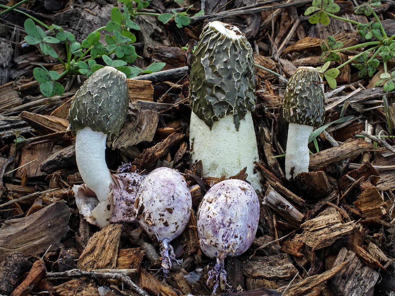 10+ Species Of The World's Weirdest Mushrooms