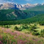 Profile picture of Colorado Dreamin