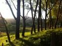 Green grass and Mt Titiraupenga