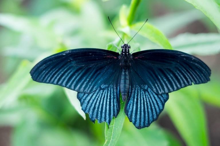 butterfly_DSCF3597