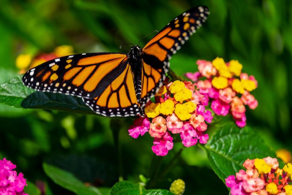 butterfly_DSF6773