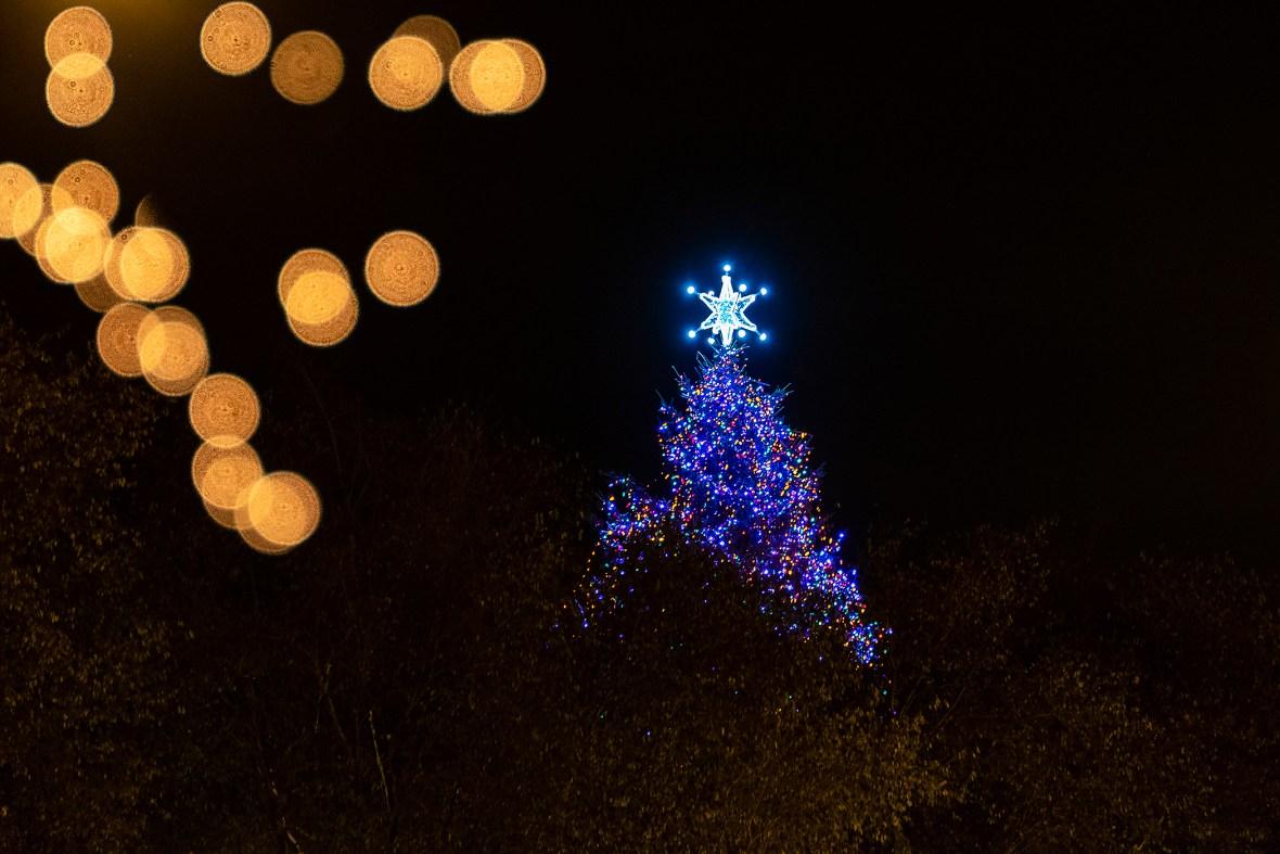 christmasTree_DSF0075.jpg
