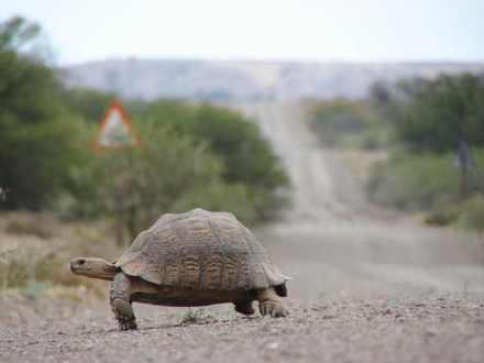 tortoise-1379167-640x480