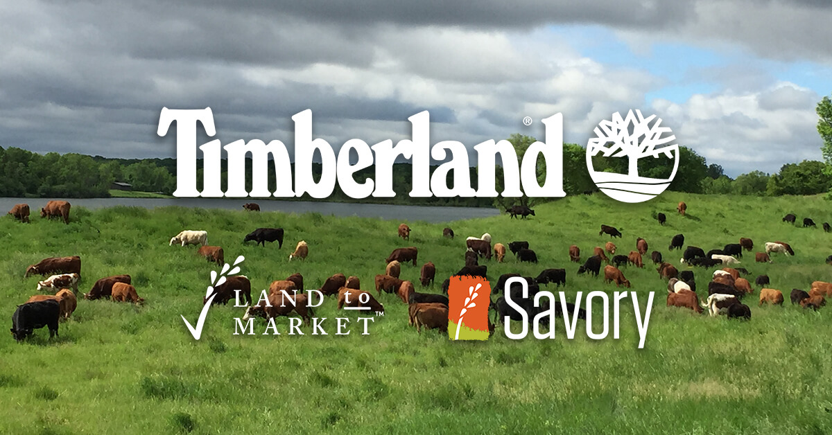 TIMBERLAND & SAVORY INSTITUTE PARTNER TO BUILD REGENERATIVE LEATHER SUPPLY CHAIN