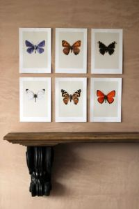 set-of-six-butterfly-prints-new-1693-p[ekm]335x502[ekm]