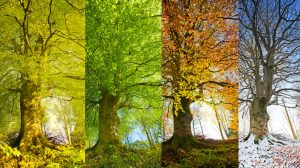 Images of a tree in four seasons.