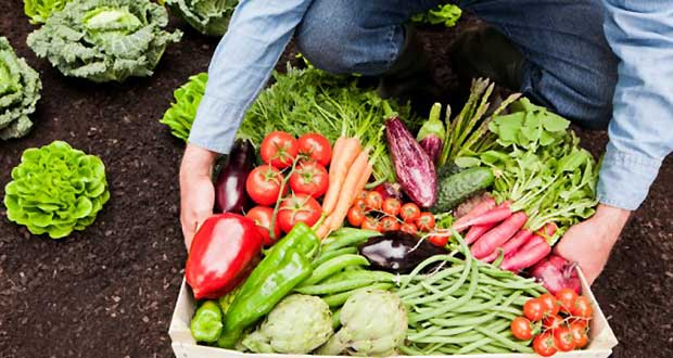 Telugu Agricultural News-Using Hormones In Veggies Cultivation At Home