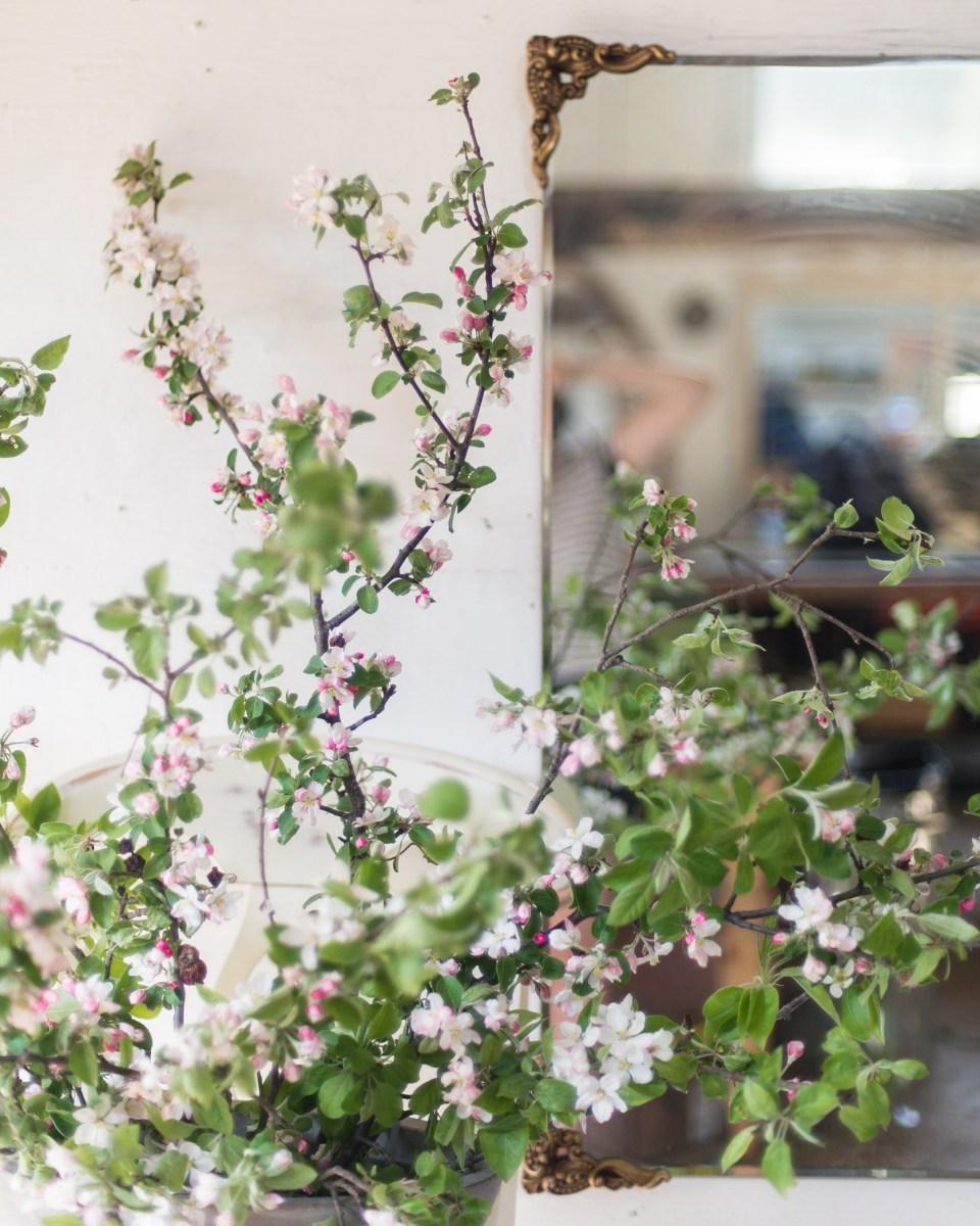 Flower Images - Apple Blossoms