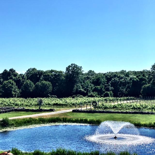 chamard vineyard and fountain image