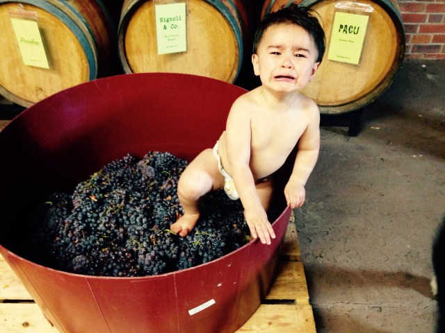 unhappy-jp-in-tub-of-grapes