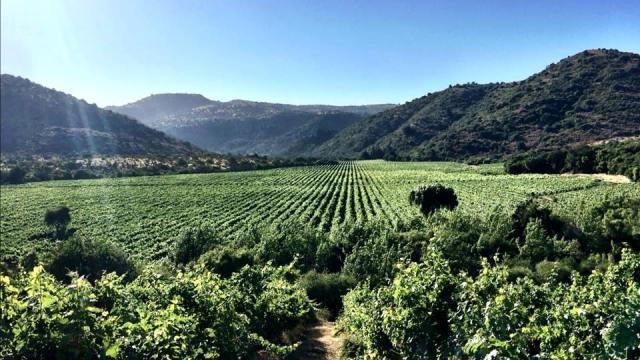 Vineyard_Curico Chile_Chilean Wine Adventure_ThreadsandVino