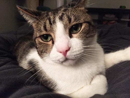 Pensive Dexter