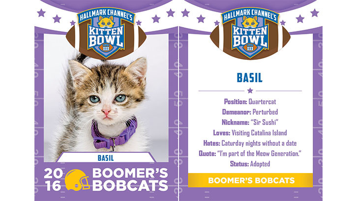 Kitten Bowl - Boomer's Cats