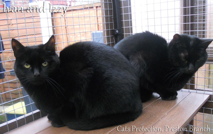 Cats Protection, Preston