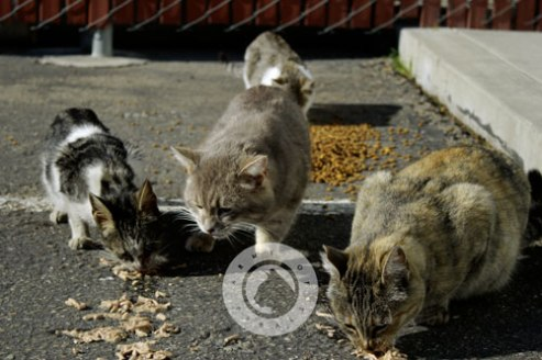 Army of Ferals
