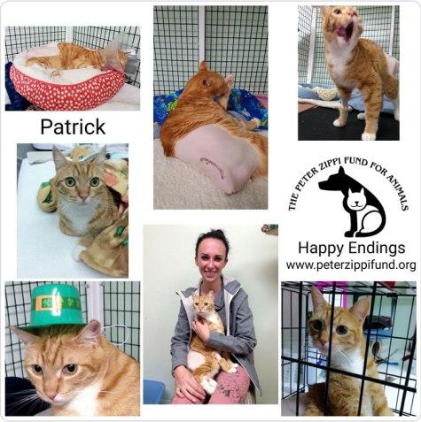 2016-04-26_PZF-Patrick.jpg