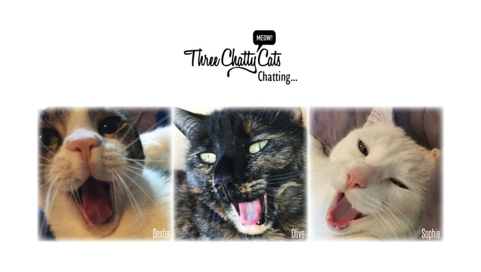 tabby tortie white cat yawning with three chatty cats chatting logo