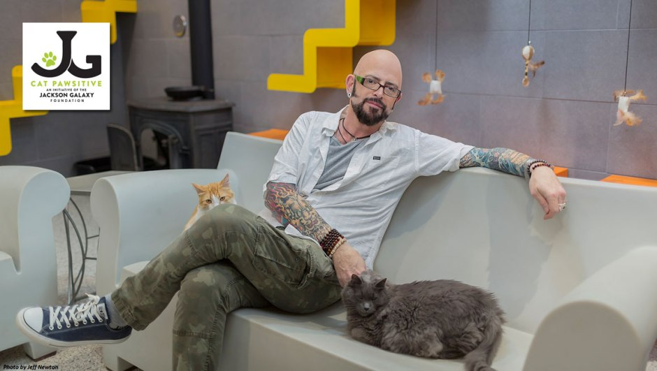 Jackson Galaxy with two cats
