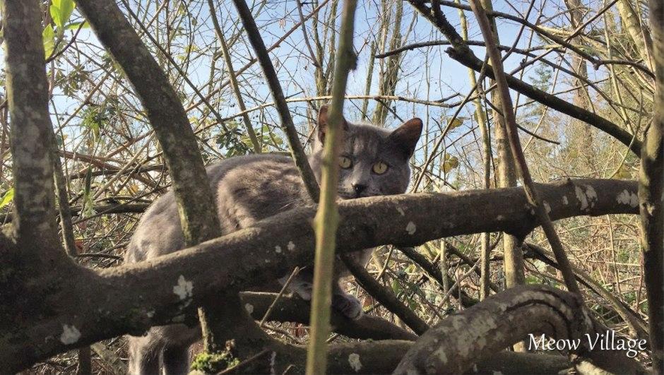 gray cat in tree
