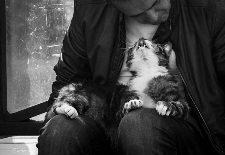 cat in man's lap