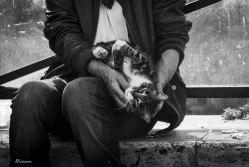 cat in man's lap