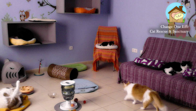 cats in sanctuary room