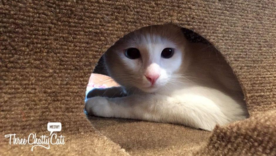 white cat in Ripple Rug