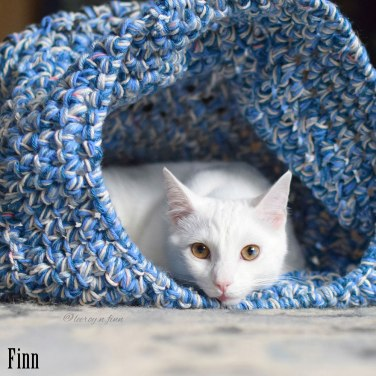 Finn, white cat