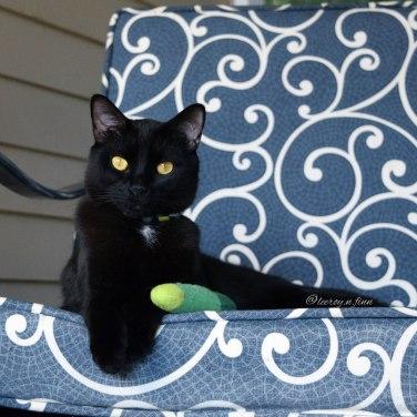Leeroy, black cat