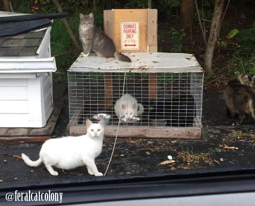 Feral Cat Colony with Donna
