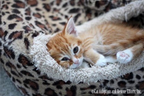 Cat Adoption and Rescue Efforts, Inc. (C.A.R.E.)